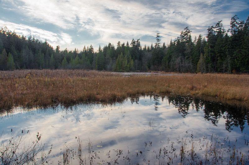 Una caminata al atardecer en Stanley Park, Vancouver | Cosas que hacer en invierno en Vancouver, BC