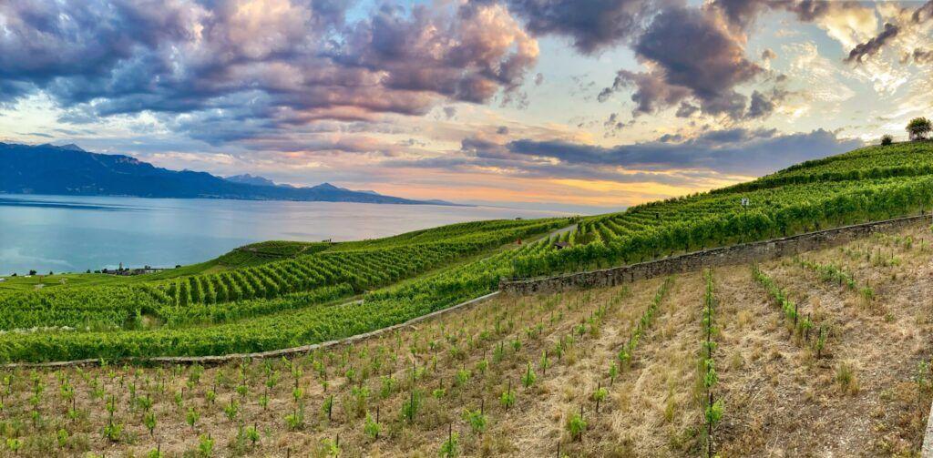 Regiones vinícolas de la UNESCO en Europa Central
