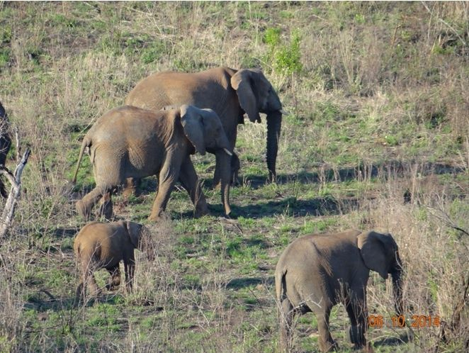 virtual safaris elephants and bush stories