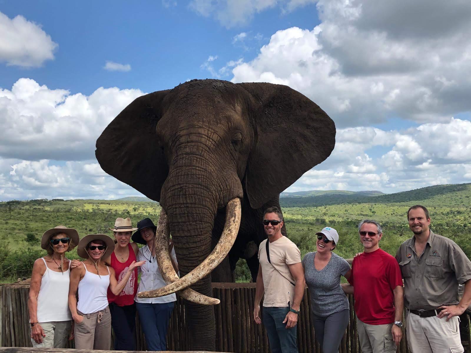 Elephant interaction group