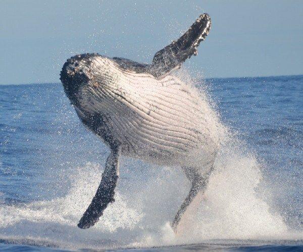 Avistamiento de ballenas en América del Sur: 6 lugares asombrosos