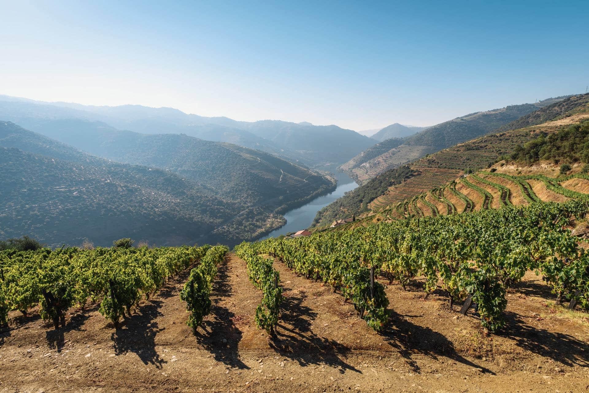 Región vinícola del Duero