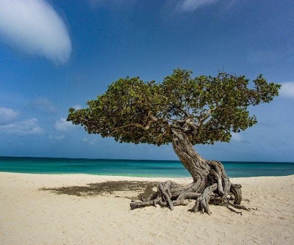 Lujo verde sin culpa en Aruba